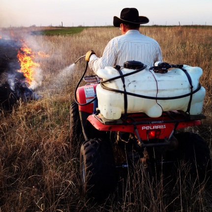 burning pastures