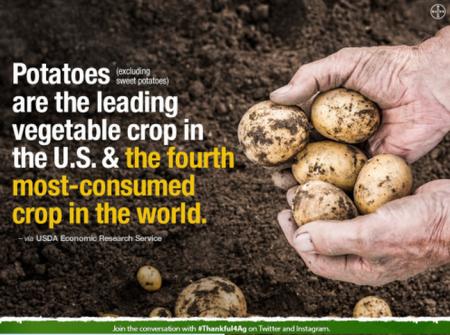 Potatoes TFA
