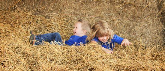 hildebrand-farms-dairy-harvest-festival