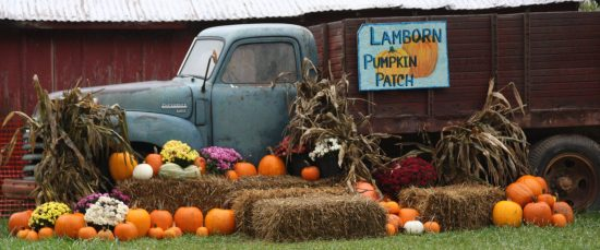 lamborn-pumpkin-patch