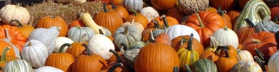 schaake-pumpkin